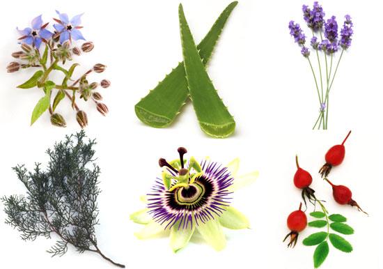 Aromatherapy Oils Botanicals